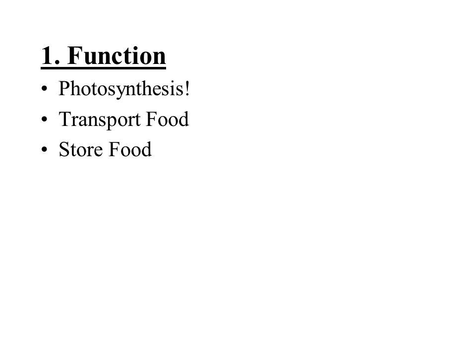 1. Function Photosynthesis! Transport Food Store Food