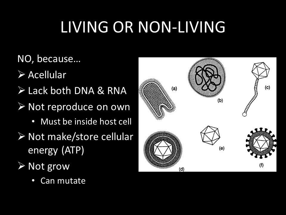 LIVING OR NON-LIVING NO, because…  Acellular  Lack both DNA & RNA  Not reproduce on own Must be inside host cell  Not make/store cellular energy (ATP)  Not grow Can mutate