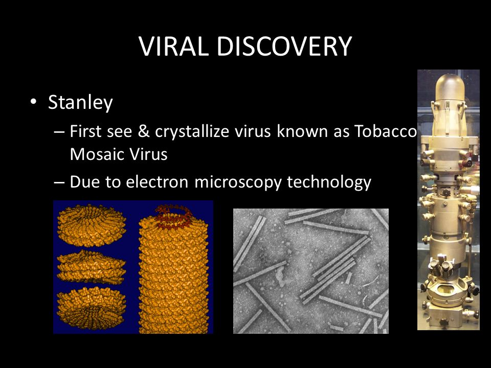 VIRAL DISCOVERY Stanley – First see & crystallize virus known as Tobacco Mosaic Virus – Due to electron microscopy technology