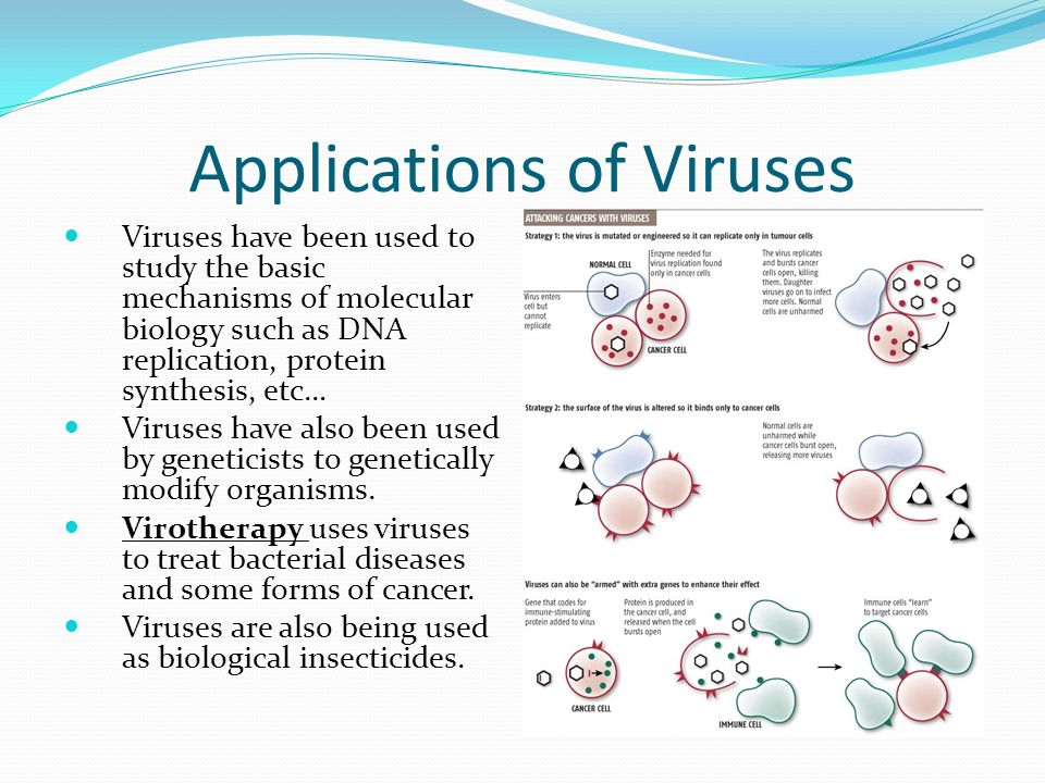 Applications of Viruses Viruses have been used to study the basic mechanisms of molecular biology such as DNA replication, protein synthesis, etc… Viruses have also been used by geneticists to genetically modify organisms.