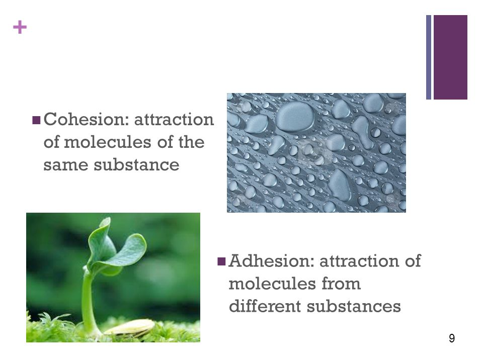+ Cohesion: attraction of molecules of the same substance Adhesion: attraction of molecules from different substances 9