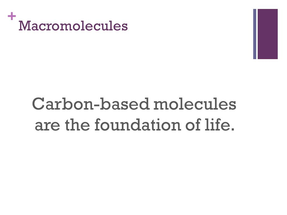 + Macromolecules Carbon-based molecules are the foundation of life.