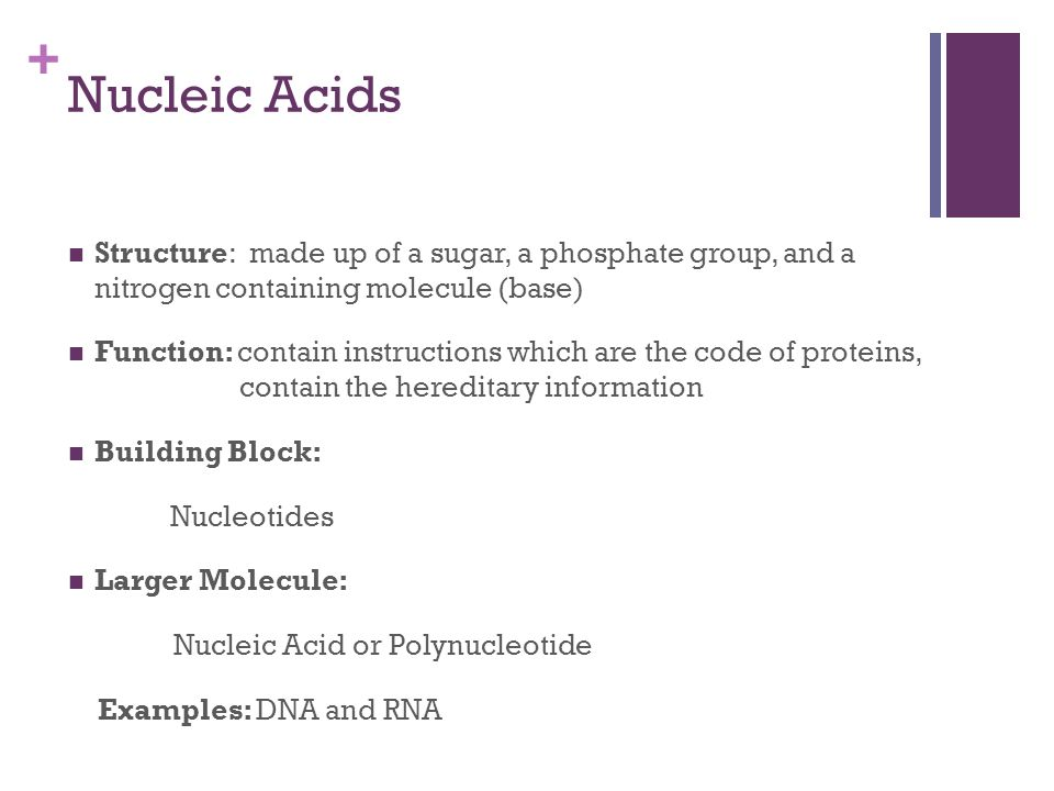+ Nucleic Acids Structure: made up of a sugar, a phosphate group, and a nitrogen containing molecule (base) Function: contain instructions which are the code of proteins, contain the hereditary information Building Block: Nucleotides Larger Molecule: Nucleic Acid or Polynucleotide Examples: DNA and RNA