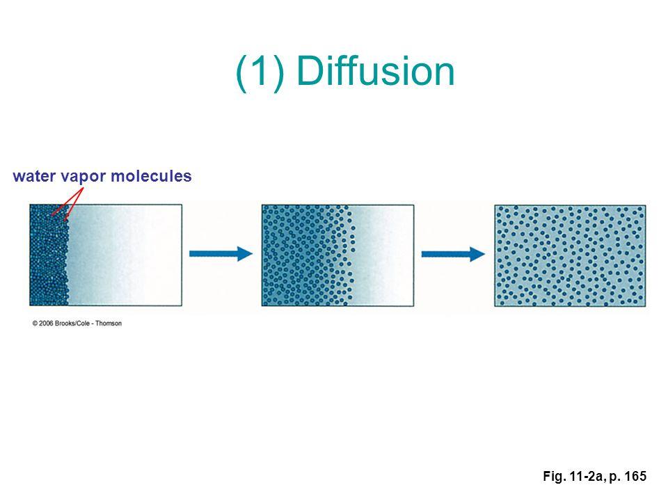Water vapor molecule