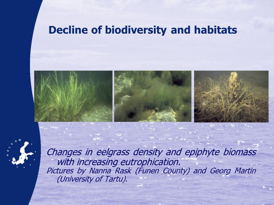 Decline of biodiversity and habitats Changes in eelgrass density and epiphyte biomass with increasing eutrophication.