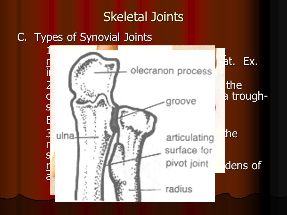 Skeletal Joints C. Types of Synovial Joints 1.