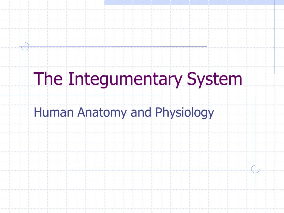 The Integumentary System Human Anatomy and Physiology