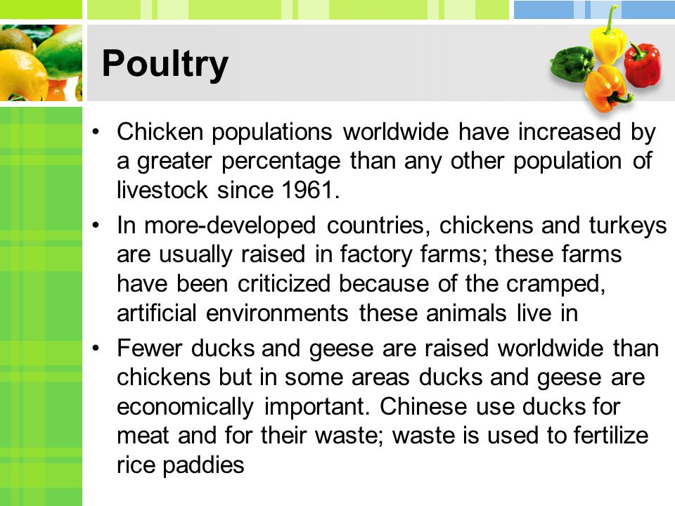 Poultry Chicken populations worldwide have increased by a greater percentage than any other population of livestock since 1961.