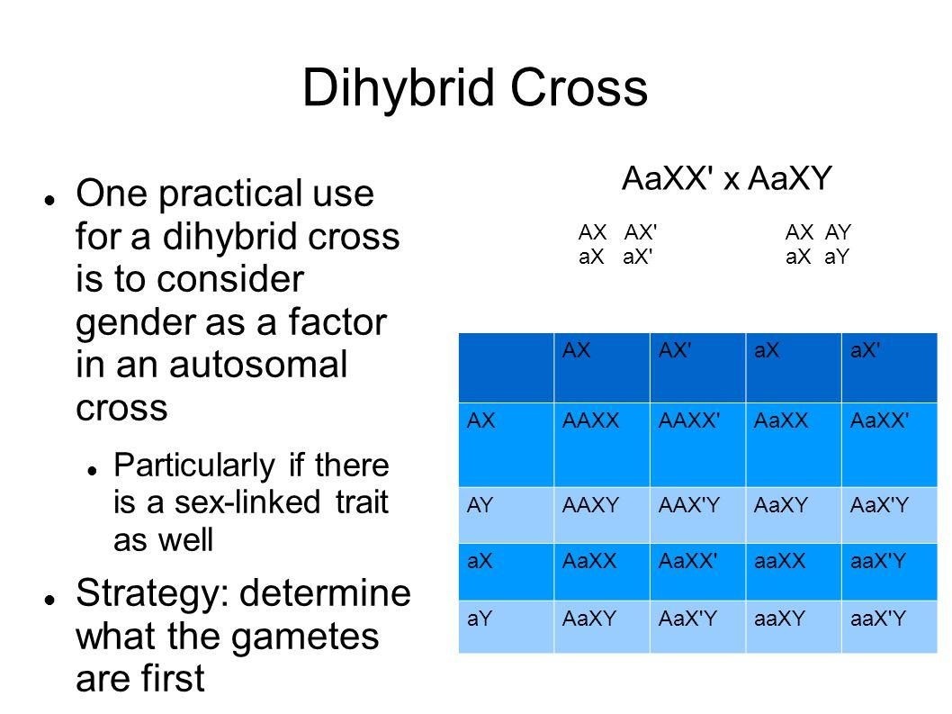 Dihybrid cross answer sheet