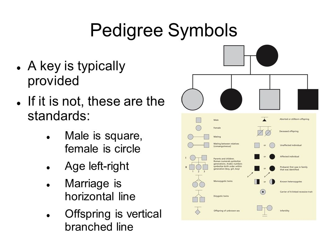 Pedigrees genetic analysis learning objectives by the end of this 5 pedigree symbols a key is typically provided if it is not these are the standards male is square female is circle age left right marriage is horizontal geenschuldenfo Images