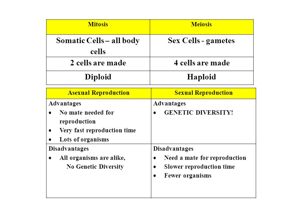MitosisMeiosis Somatic Cells – all body cells Sex Cells - gametes 2 cells are made4 cells are made DiploidHaploid Asexual ReproductionSexual Reproduction Advantages  No mate needed for reproduction  Very fast reproduction time  Lots of organisms Advantages  GENETIC DIVERSITY.