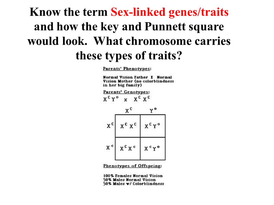 Know the term Sex-linked genes/traits and how the key and Punnett square would look.