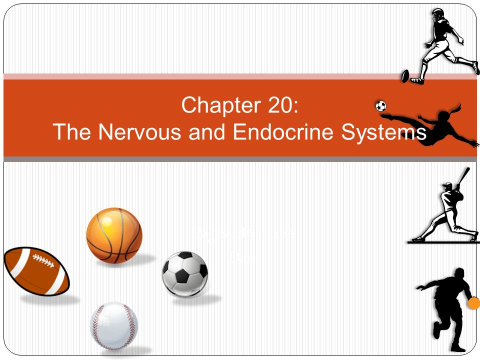 Pages 546 – 564 Date Chapter 20: The Nervous and Endocrine Systems
