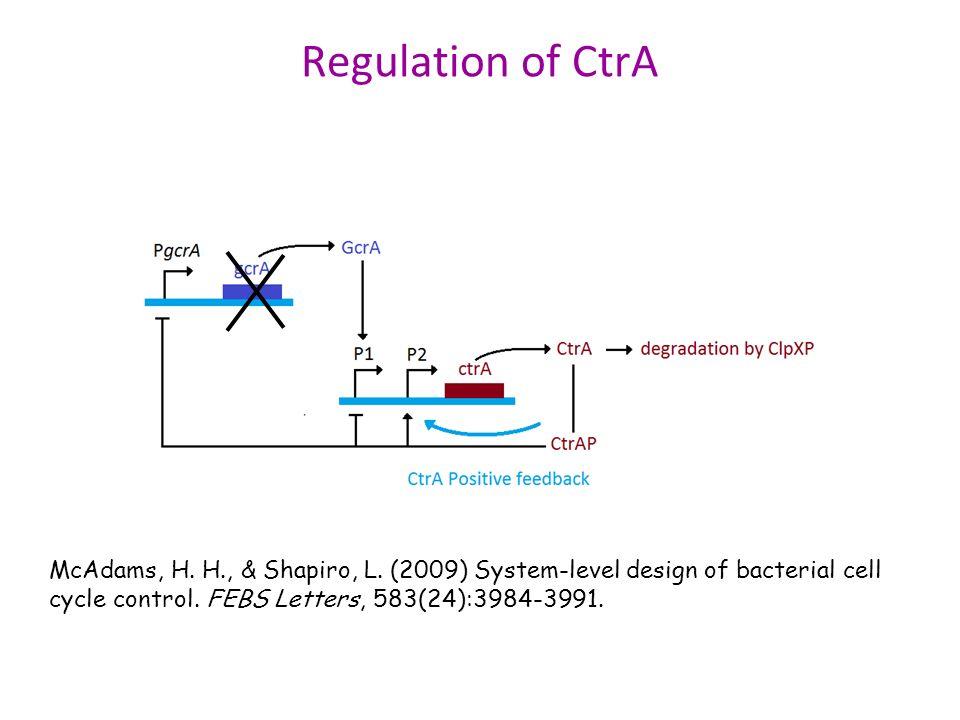 Regulation of CtrA McAdams, H. H., & Shapiro, L.