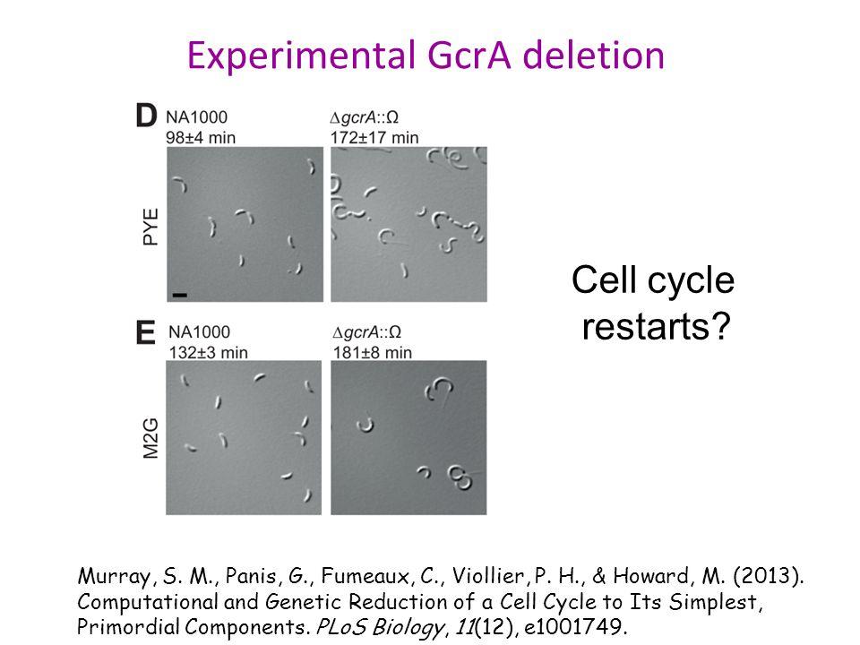Experimental GcrA deletion Murray, S. M., Panis, G., Fumeaux, C., Viollier, P.