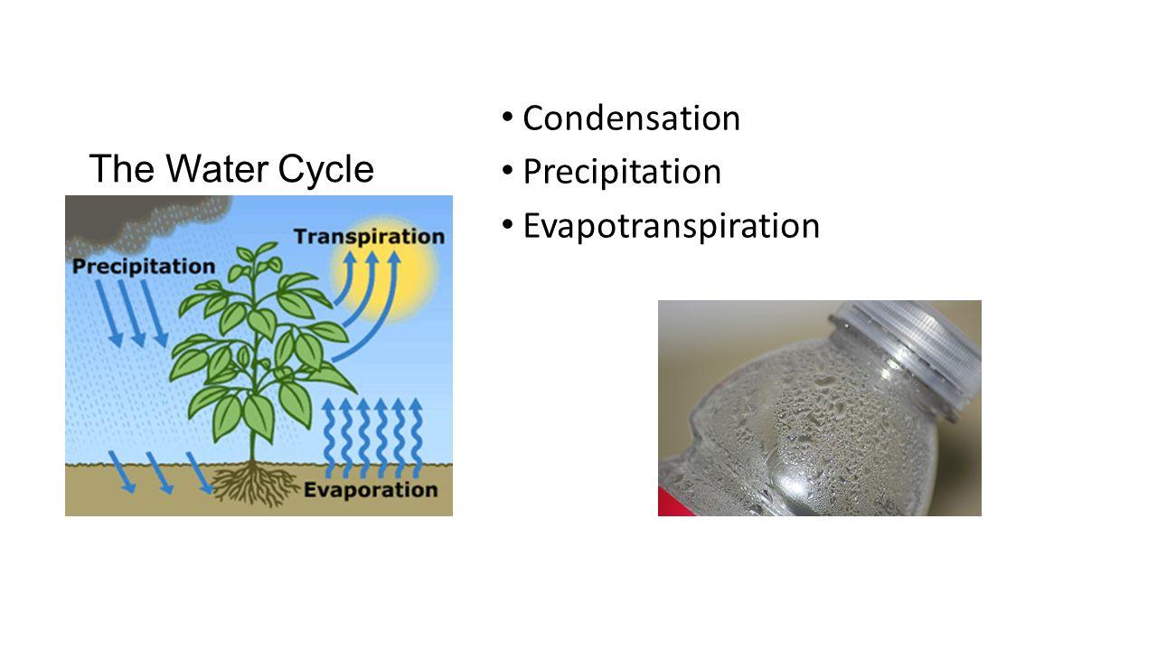 The Water Cycle Condensation Precipitation Evapotranspiration