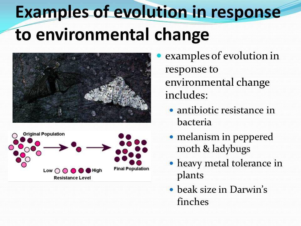Evolution definition