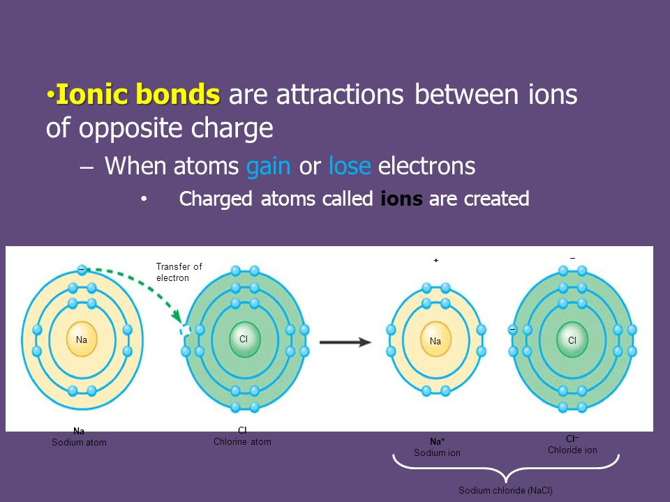 Ionic bonds Ionic bonds are attractions between ions of opposite charge – When atoms gain or lose electrons Charged atoms called ions are created Transfer of electron Na Sodium atom Cl Chlorine atom Na + Sodium ion Cl – Chloride ion Sodium chloride (NaCl) Na Cl Na + – – –