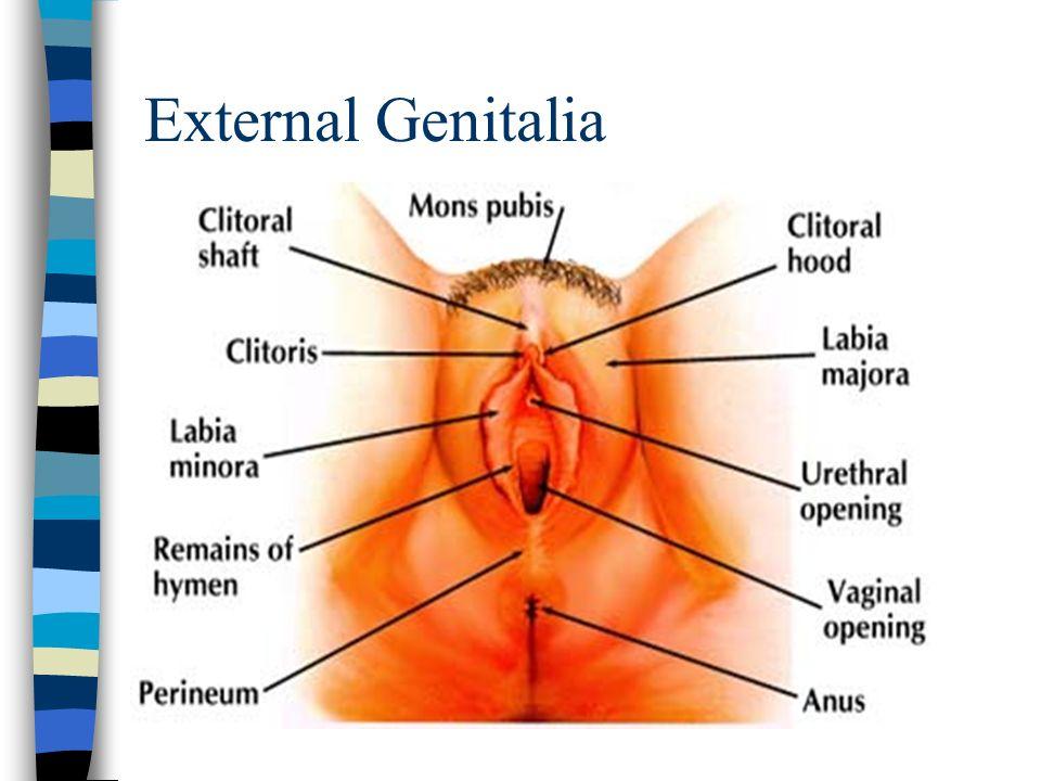 Mons pubis vulva clitoris pics