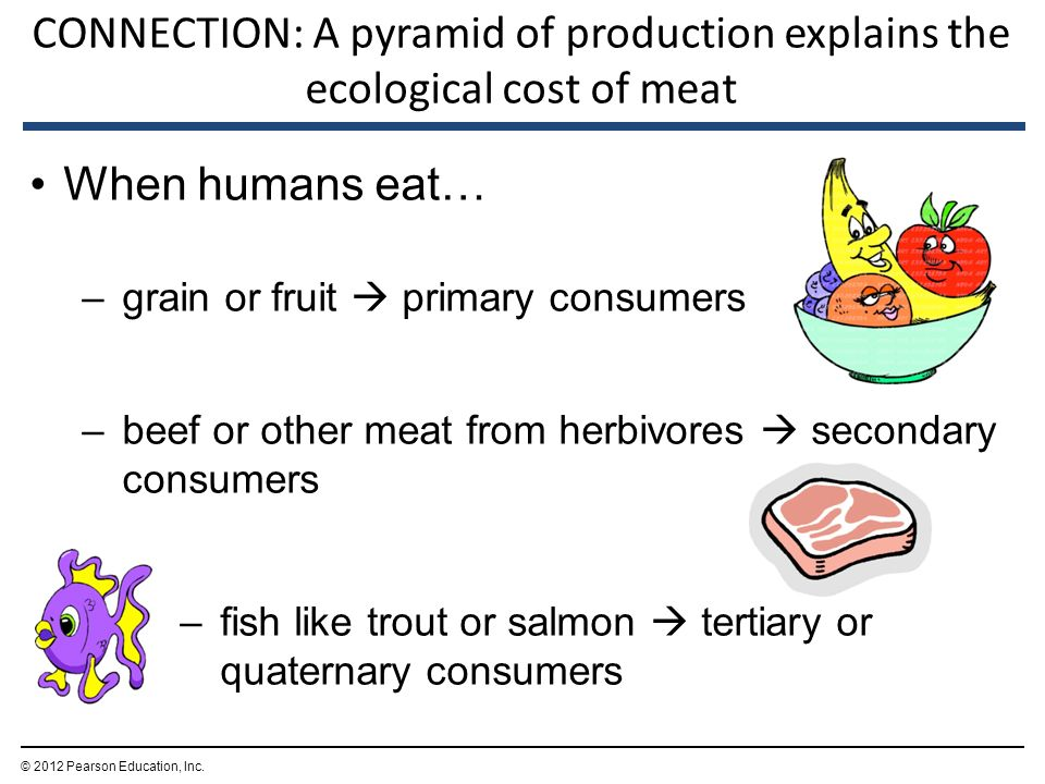 CONNECTION: A pyramid of production explains the ecological cost of meat When humans eat… –grain or fruit  primary consumers –beef or other meat from herbivores  secondary consumers –fish like trout or salmon  tertiary or quaternary consumers © 2012 Pearson Education, Inc.