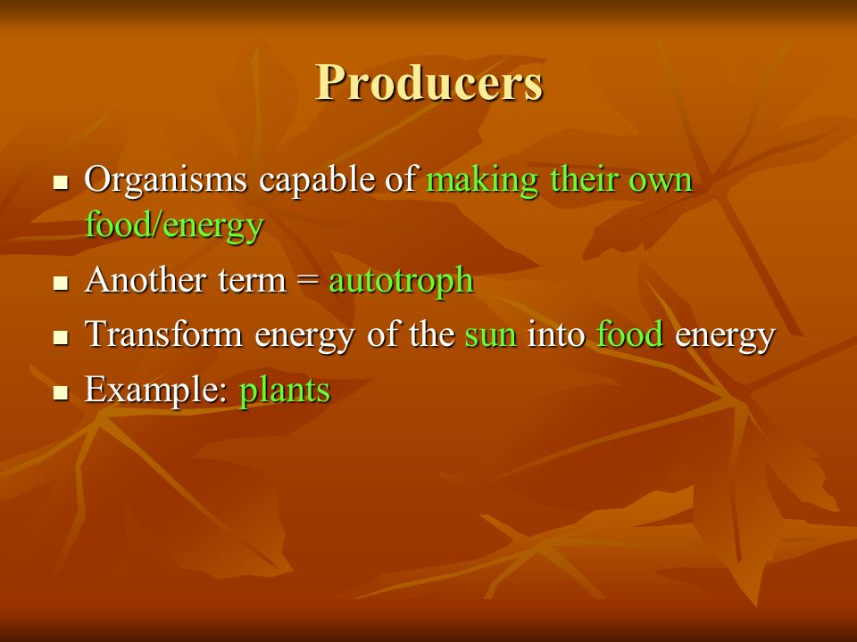 Producers Organisms capable of making their own food/energy Organisms capable of making their own food/energy Another term = autotroph Another term = autotroph Transform energy of the sun into food energy Transform energy of the sun into food energy Example: plants Example: plants