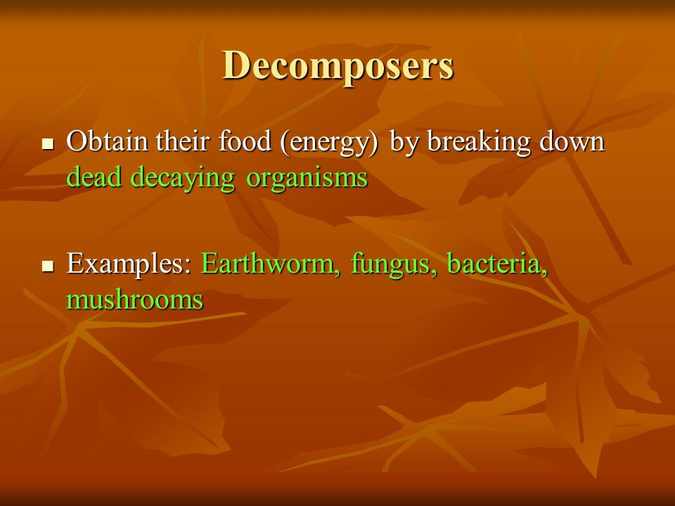 Decomposers Obtain their food (energy) by breaking down dead decaying organisms Obtain their food (energy) by breaking down dead decaying organisms Examples: Earthworm, fungus, bacteria, mushrooms Examples: Earthworm, fungus, bacteria, mushrooms