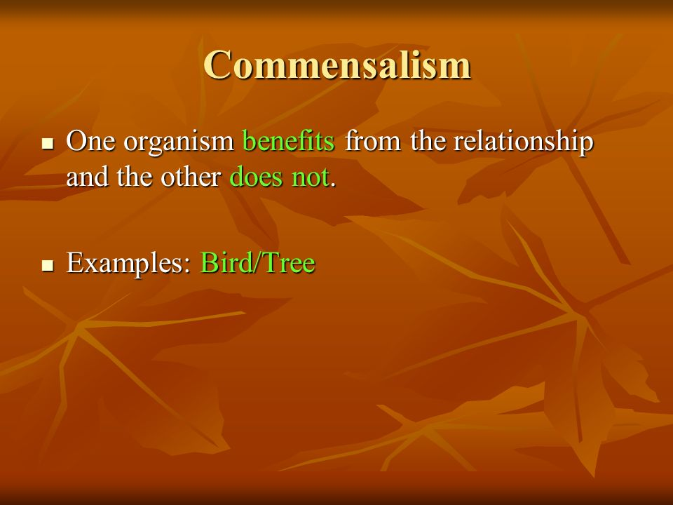 Commensalism One organism benefits from the relationship and the other does not.
