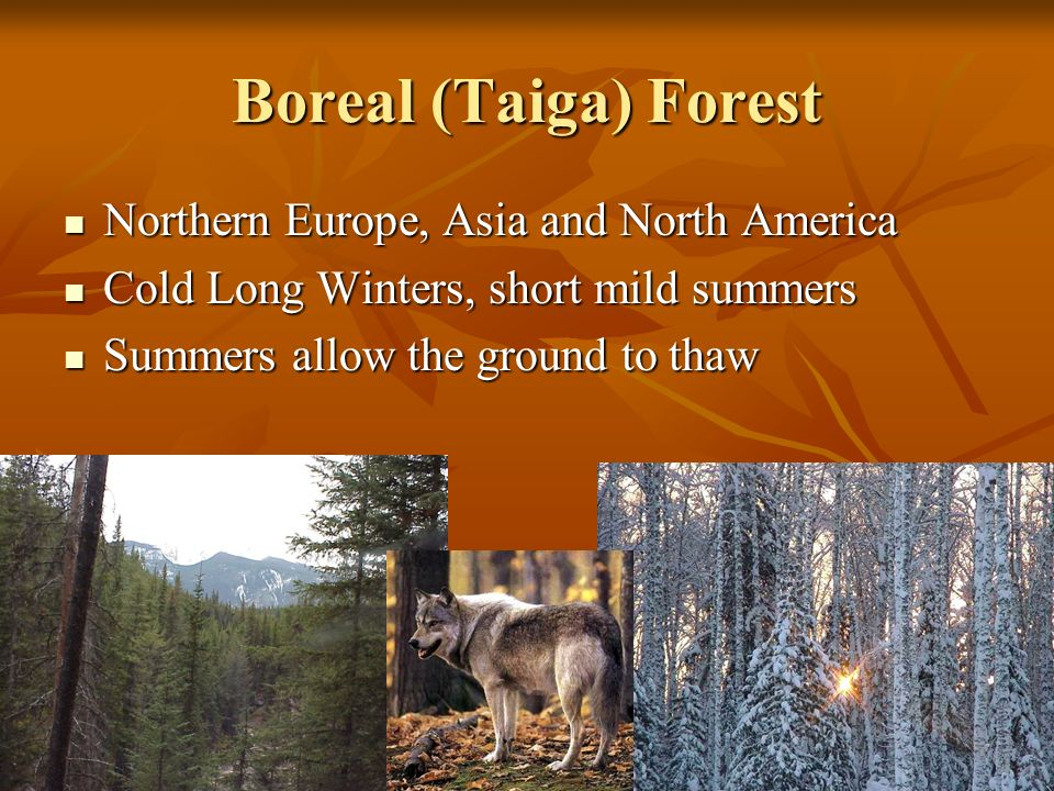 Boreal (Taiga) Forest Northern Europe, Asia and North America Northern Europe, Asia and North America Cold Long Winters, short mild summers Cold Long Winters, short mild summers Summers allow the ground to thaw Summers allow the ground to thaw