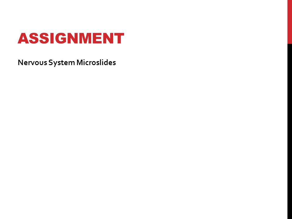 ASSIGNMENT Nervous System Microslides