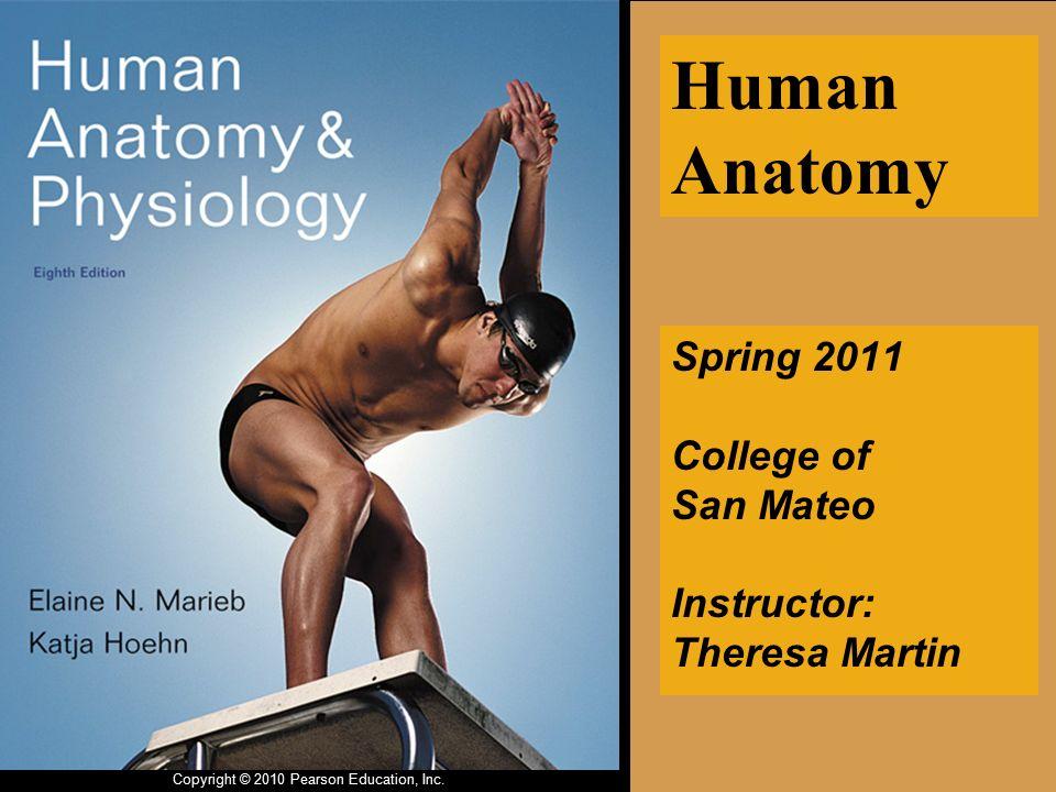 Contemporáneo Human Anatomy And Physiology Elaine Nicpon Marieb ...