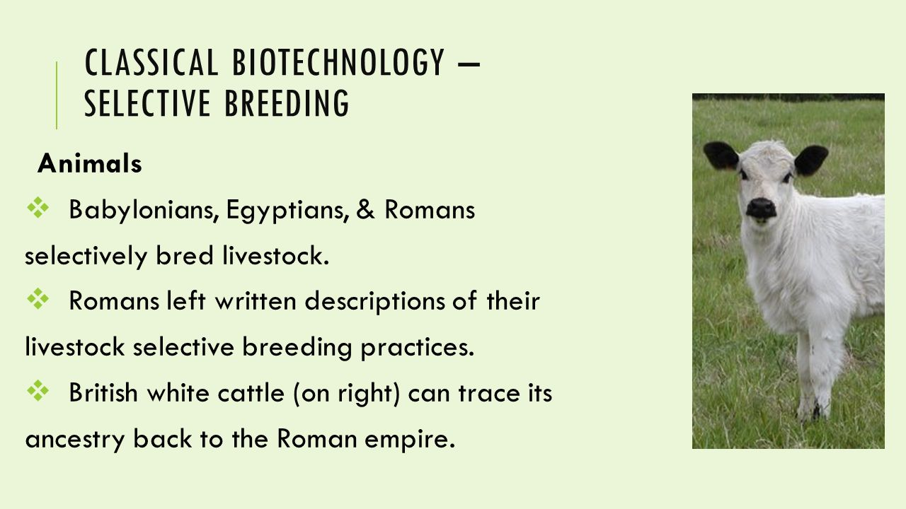 breeding of plants essay The horse forum  horse resources  horse protection  my essay on horse slaughter people are breeding more the remaining equine slaughter plants in the.