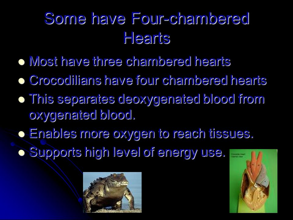 Some have Four-chambered Hearts Most have three chambered hearts Most have three chambered hearts Crocodilians have four chambered hearts Crocodilians have four chambered hearts This separates deoxygenated blood from oxygenated blood.