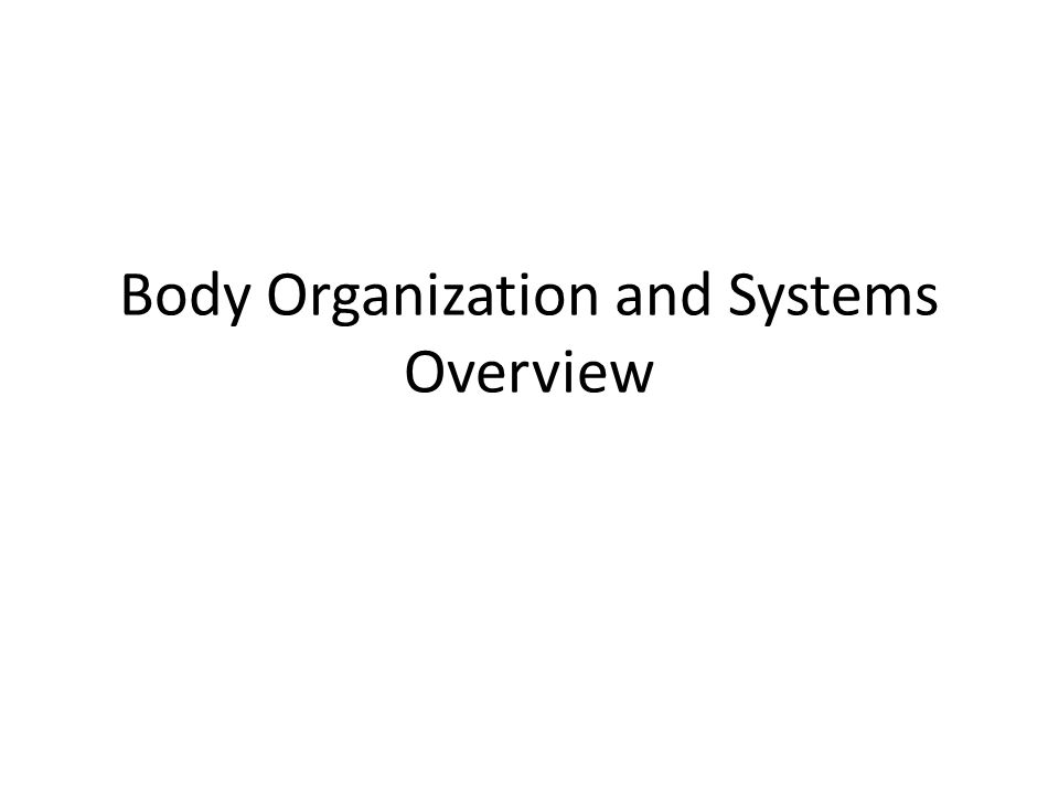 Body Organization and Systems Overview