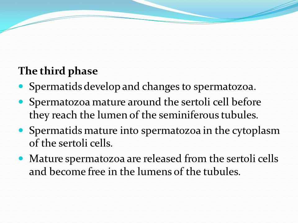 The third phase Spermatids develop and changes to spermatozoa.