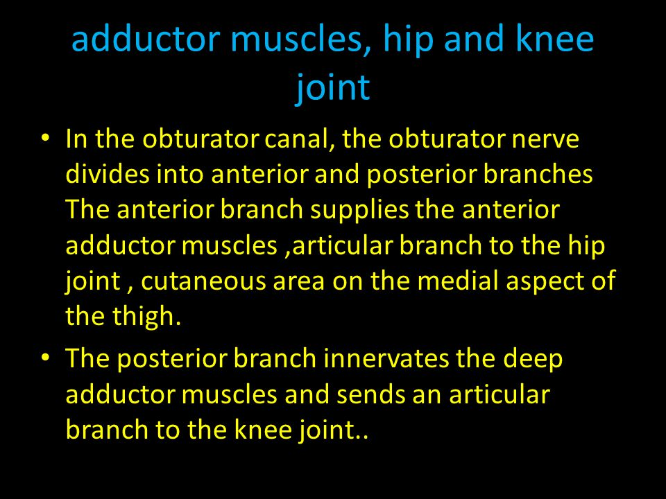 adductor muscles, hip and knee joint In the obturator canal, the obturator nerve divides into anterior and posterior branches The anterior branch supplies the anterior adductor muscles,articular branch to the hip joint, cutaneous area on the medial aspect of the thigh.
