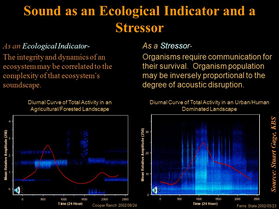Diurnal Curve of Total Activity in an Agricultural/Forested Landscape Cooper Ranch 2002/08/24 Diurnal Curve of Total Activity in an Urban/Human Dominated Landscape Ferris State 2002/05/23 Sound as an Ecological Indicator and a Stressor As an Ecological Indicator- The integrity and dynamics of an ecosystem may be correlated to the complexity of that ecosystem's soundscape.