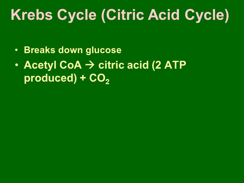 Krebs Cycle (Citric Acid Cycle) Breaks down glucose Acetyl CoA  citric acid (2 ATP produced) + CO 2