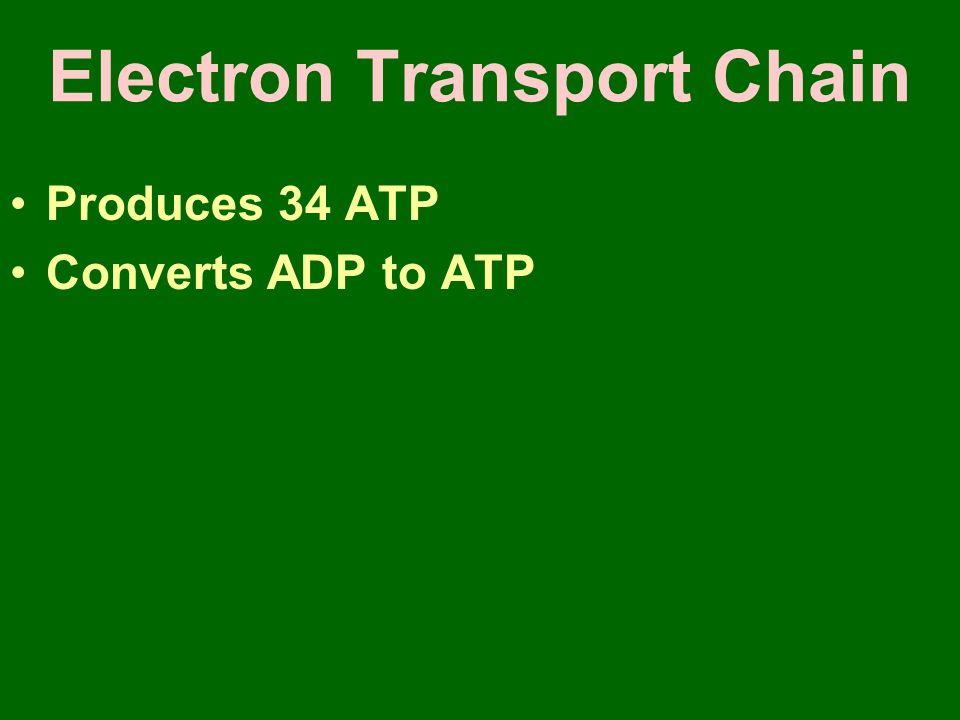 Electron Transport Chain Produces 34 ATP Converts ADP to ATP