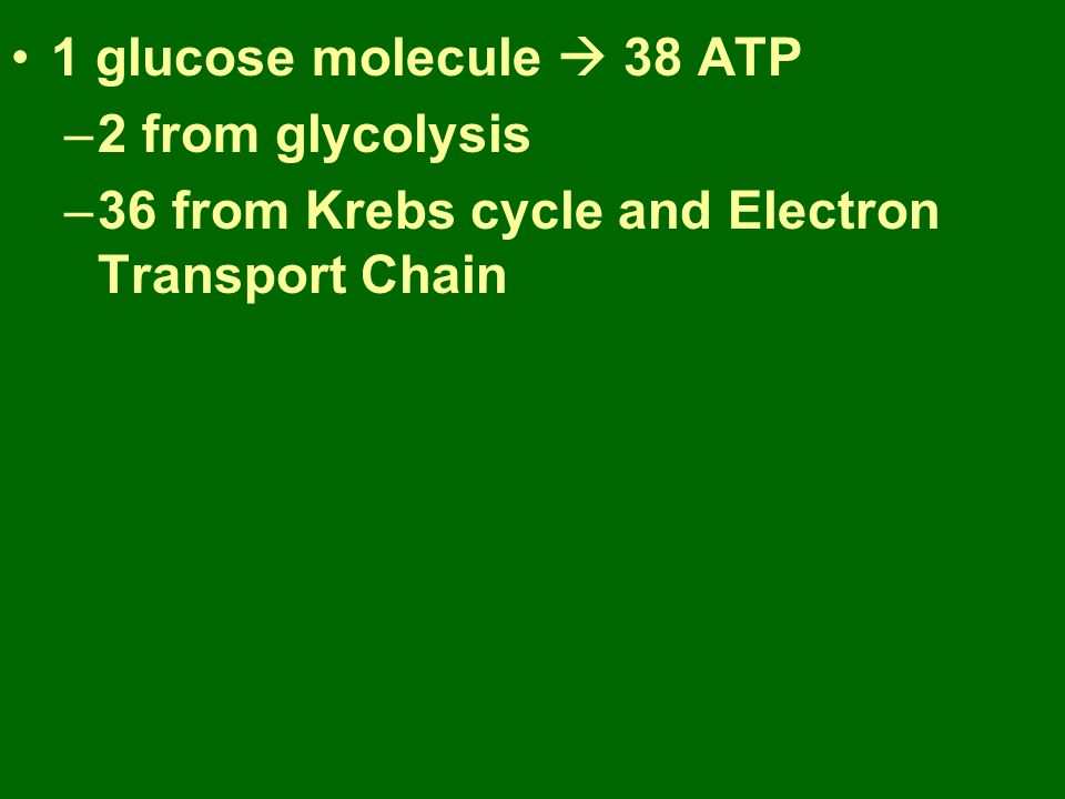 1 glucose molecule  38 ATP –2 from glycolysis –36 from Krebs cycle and Electron Transport Chain