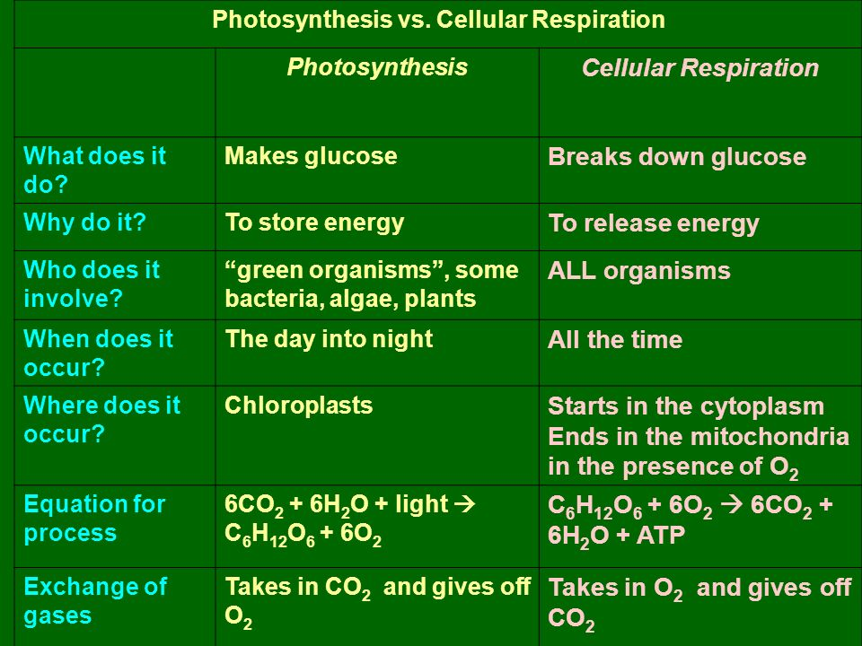 Photosynthesis vs. Cellular Respiration Photosynthesis Cellular Respiration What does it do.