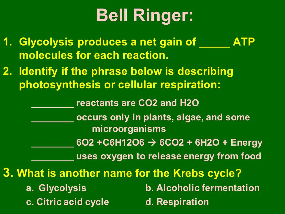 Bell Ringer: 1.Glycolysis produces a net gain of _____ ATP molecules for each reaction.