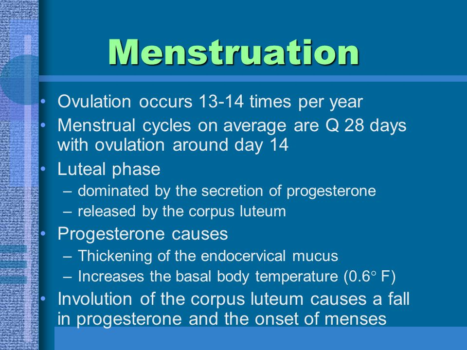 Menstruation Ovulation occurs times per year Menstrual cycles on average are Q 28 days with ovulation around day 14 Luteal phase –dominated by the secretion of progesterone –released by the corpus luteum Progesterone causes –Thickening of the endocervical mucus –Increases the basal body temperature (0.6° F) Involution of the corpus luteum causes a fall in progesterone and the onset of menses