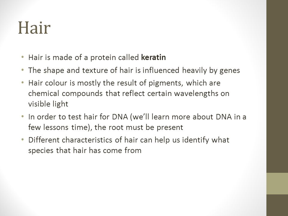 Hair Hair is made of a protein called keratin The shape and texture of hair is influenced heavily by genes Hair colour is mostly the result of pigments, which are chemical compounds that reflect certain wavelengths on visible light In order to test hair for DNA (we'll learn more about DNA in a few lessons time), the root must be present Different characteristics of hair can help us identify what species that hair has come from