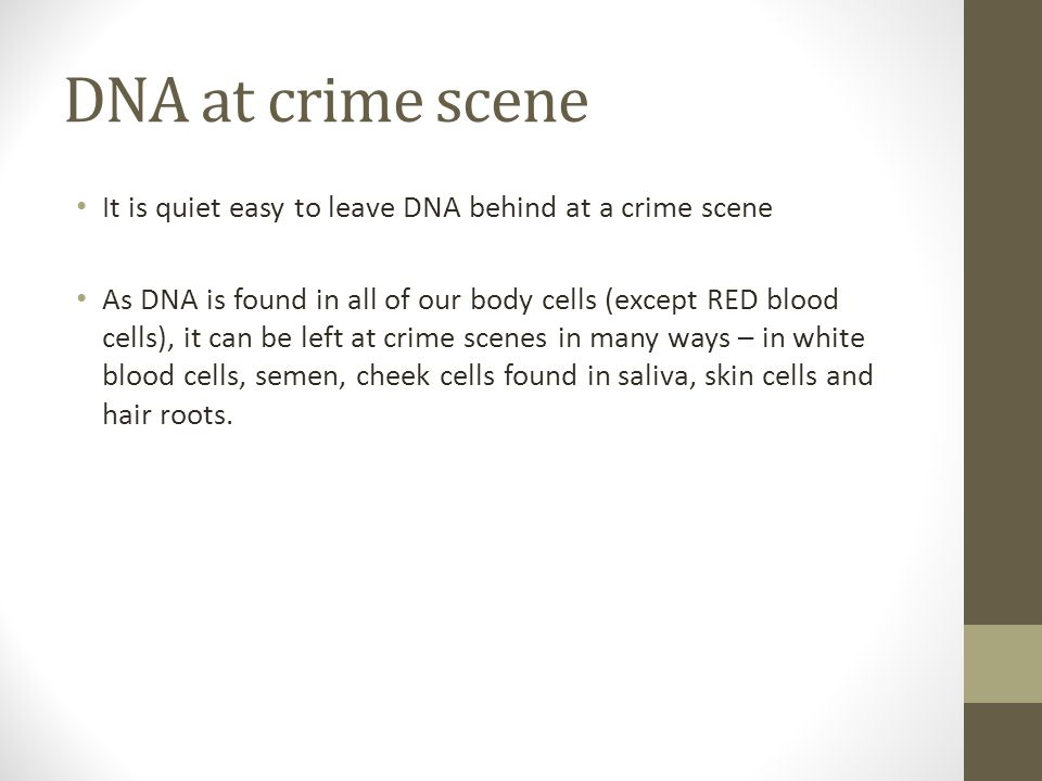 DNA at crime scene It is quiet easy to leave DNA behind at a crime scene As DNA is found in all of our body cells (except RED blood cells), it can be left at crime scenes in many ways – in white blood cells, semen, cheek cells found in saliva, skin cells and hair roots.