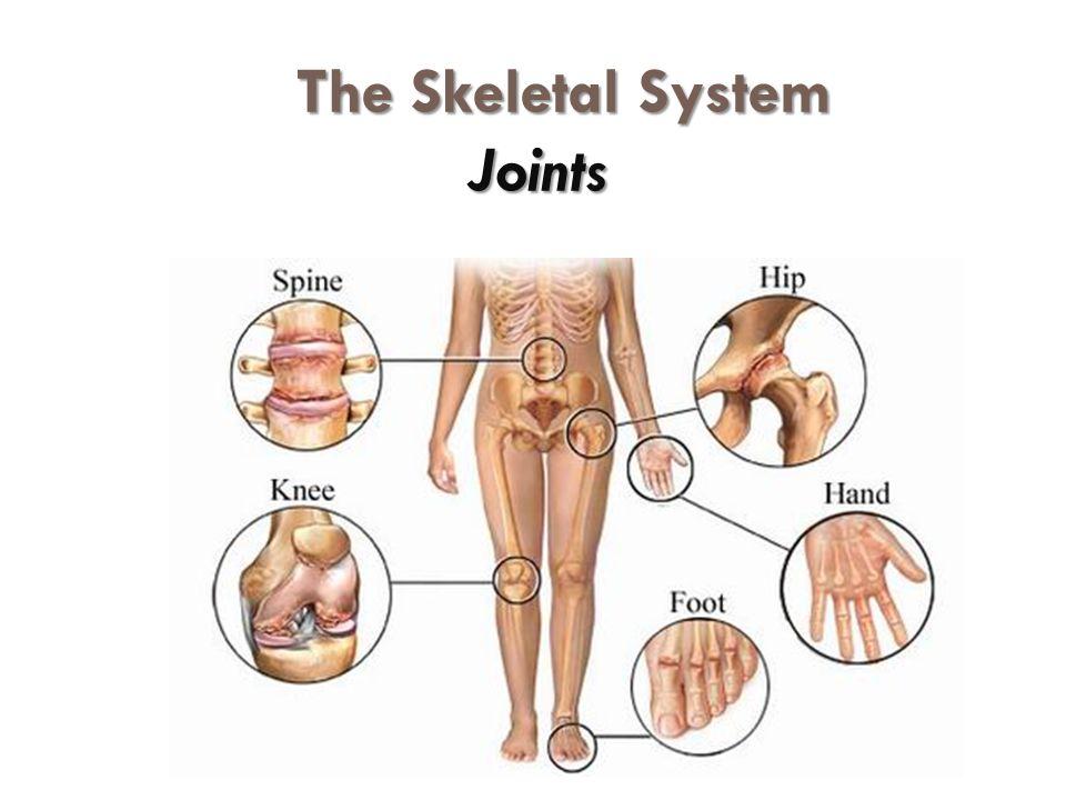 The Skeletal System Joints Joints Articulations Of Bones