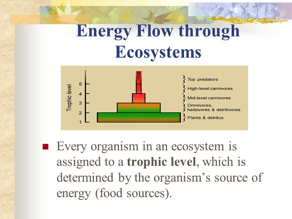 Energy Flow through Ecosystems Every organism in an ecosystem is assigned to a trophic level, which is determined by the organism's source of energy (food sources).