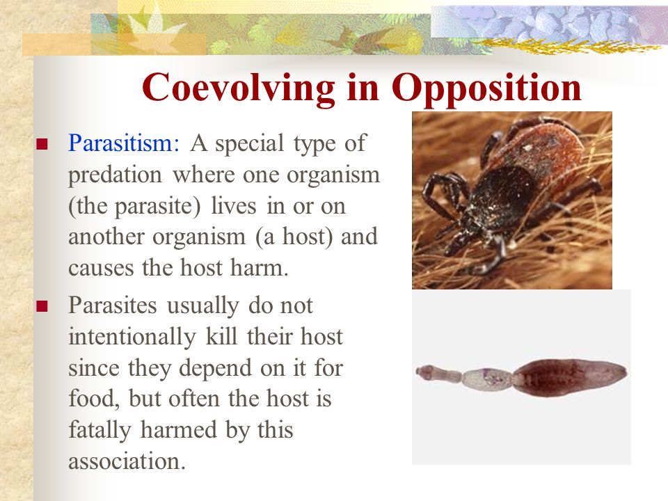Coevolving in Opposition Parasitism: A special type of predation where one organism (the parasite) lives in or on another organism (a host) and causes the host harm.