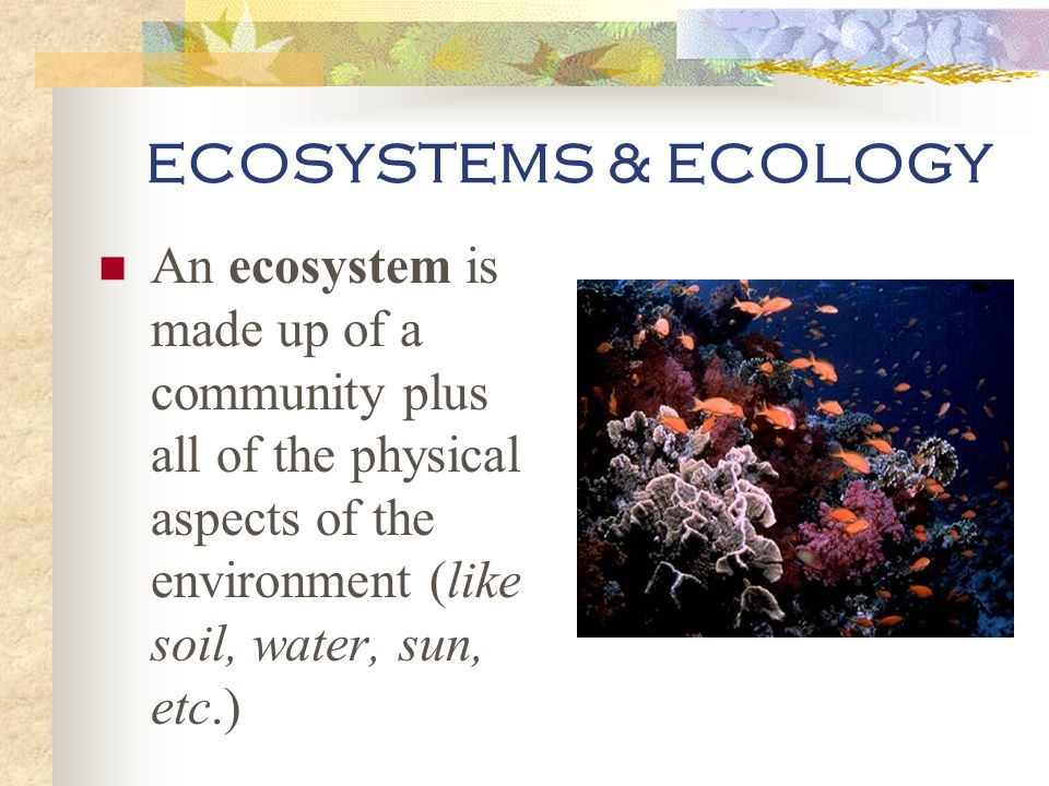 ECOSYSTEMS & ECOLOGY An ecosystem is made up of a community plus all of the physical aspects of the environment (like soil, water, sun, etc.)