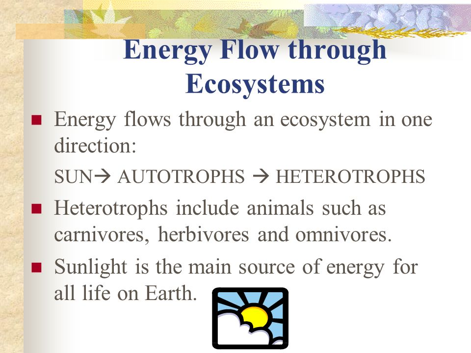 Energy Flow through Ecosystems Energy flows through an ecosystem in one direction: SUN  AUTOTROPHS  HETEROTROPHS Heterotrophs include animals such as carnivores, herbivores and omnivores.