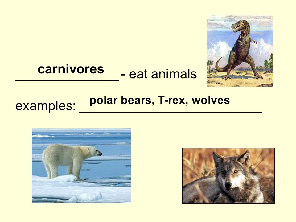 ______________ - eat animals examples: _________________________ carnivores polar bears, T-rex, wolves
